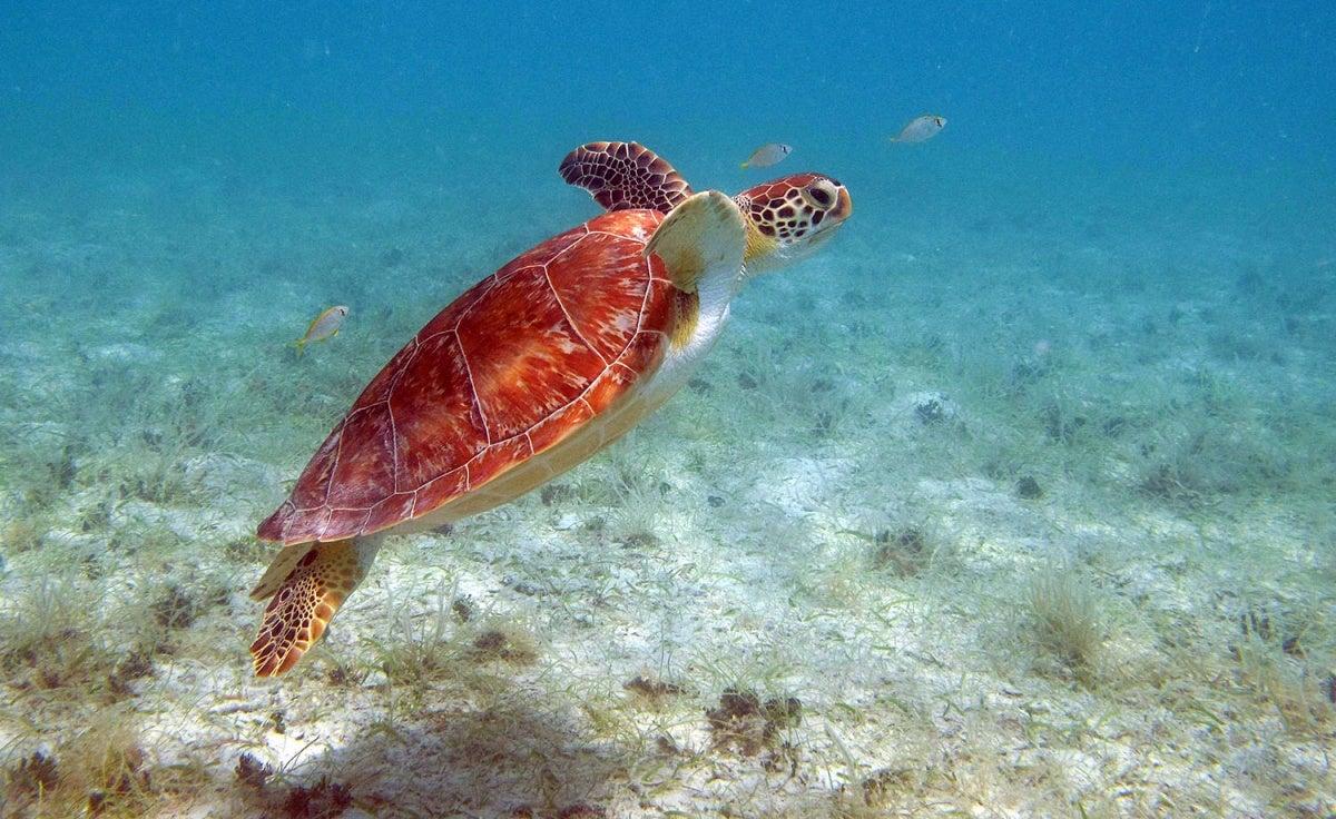 virgin islands - scuba diving
