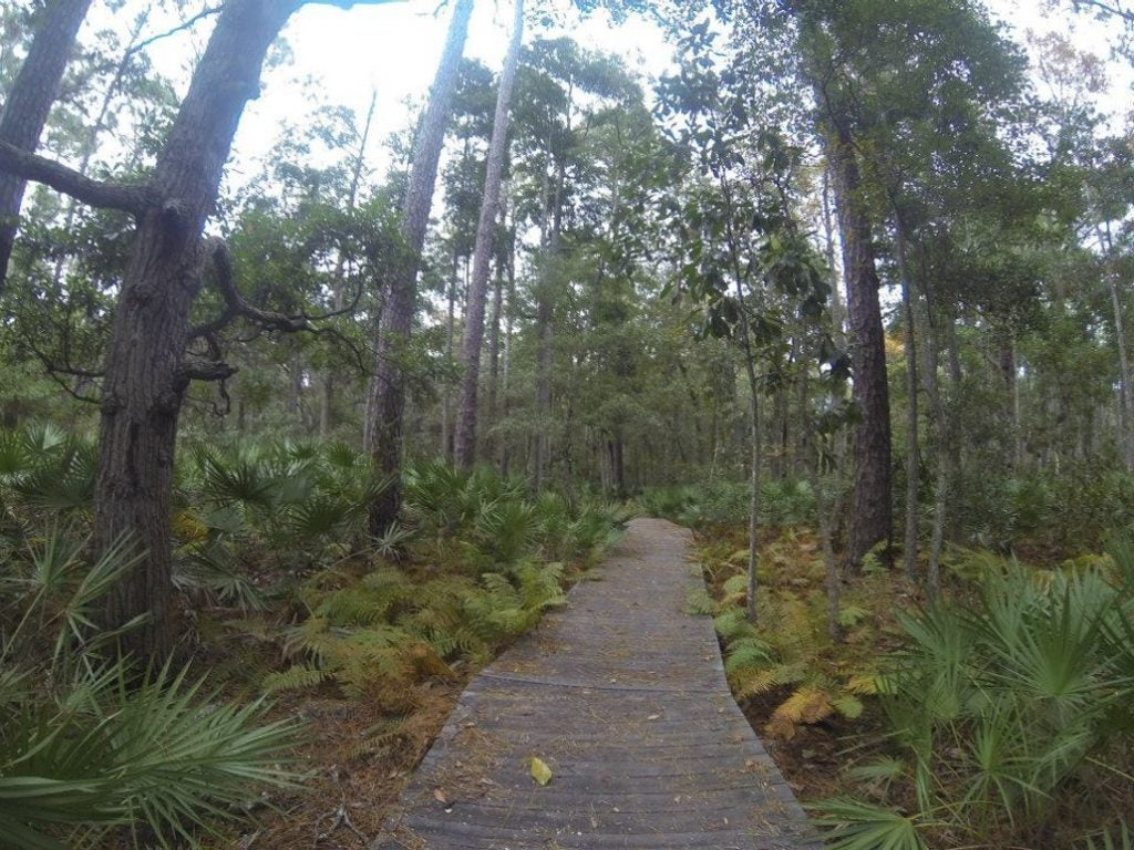 path winds through lush georgia coast forest