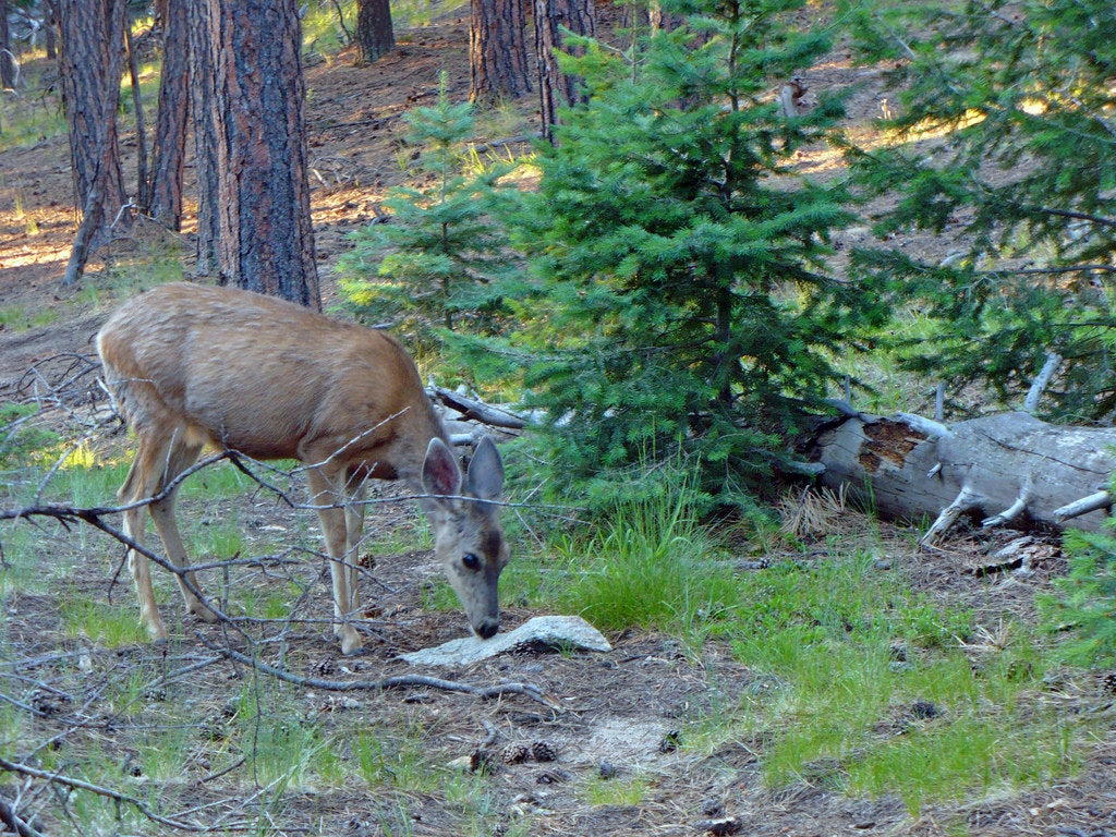 deer investigates driftwood at a campground chosen for new mexico wildlife encounters