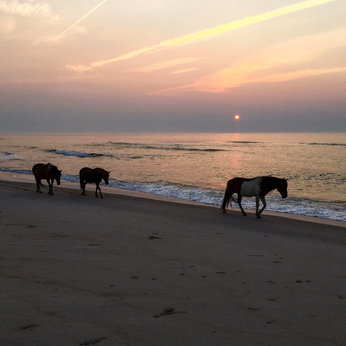 assateague campgrounds in maryland