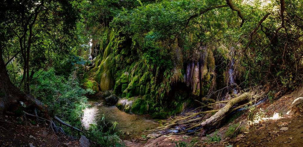 lush green forests in colorado bend state park