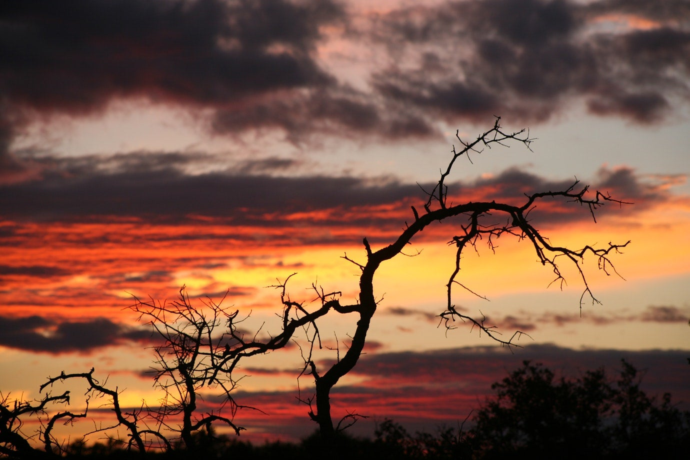 tree silhouette at sunset in colorado bend state park