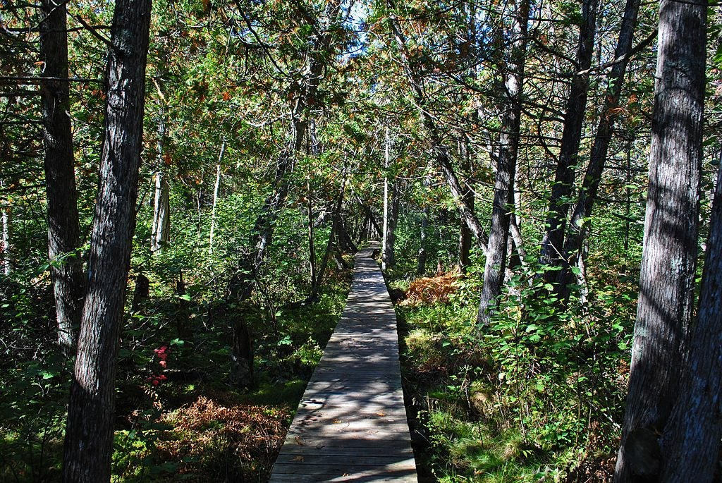 The Brule Bog Boardwalk on the North Country Trail