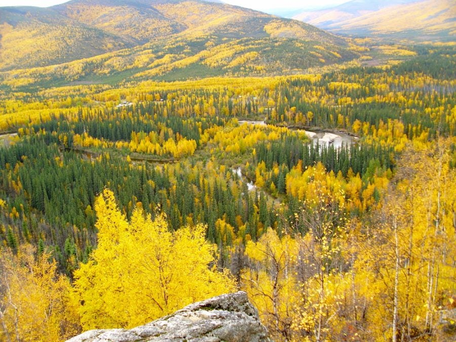 fall colors and sweeping views of the Chena River Valley near north pole, alaska