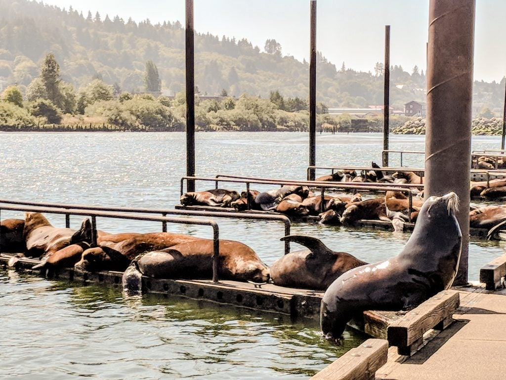 Sea lions on docks near Astoria, OR along the Oregon coast trail