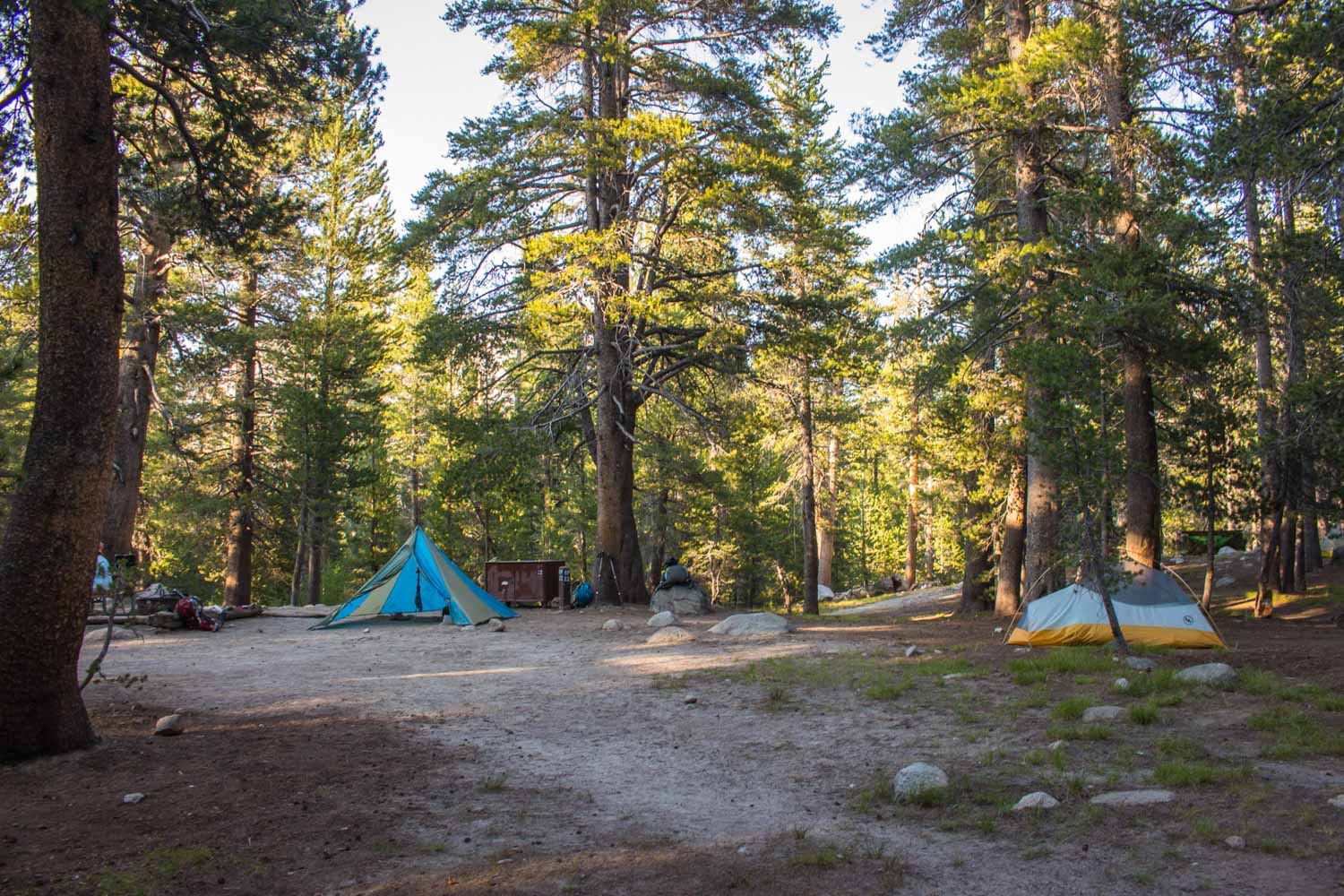 two tents set up in a wooded Tuolumne Meadows Campsite