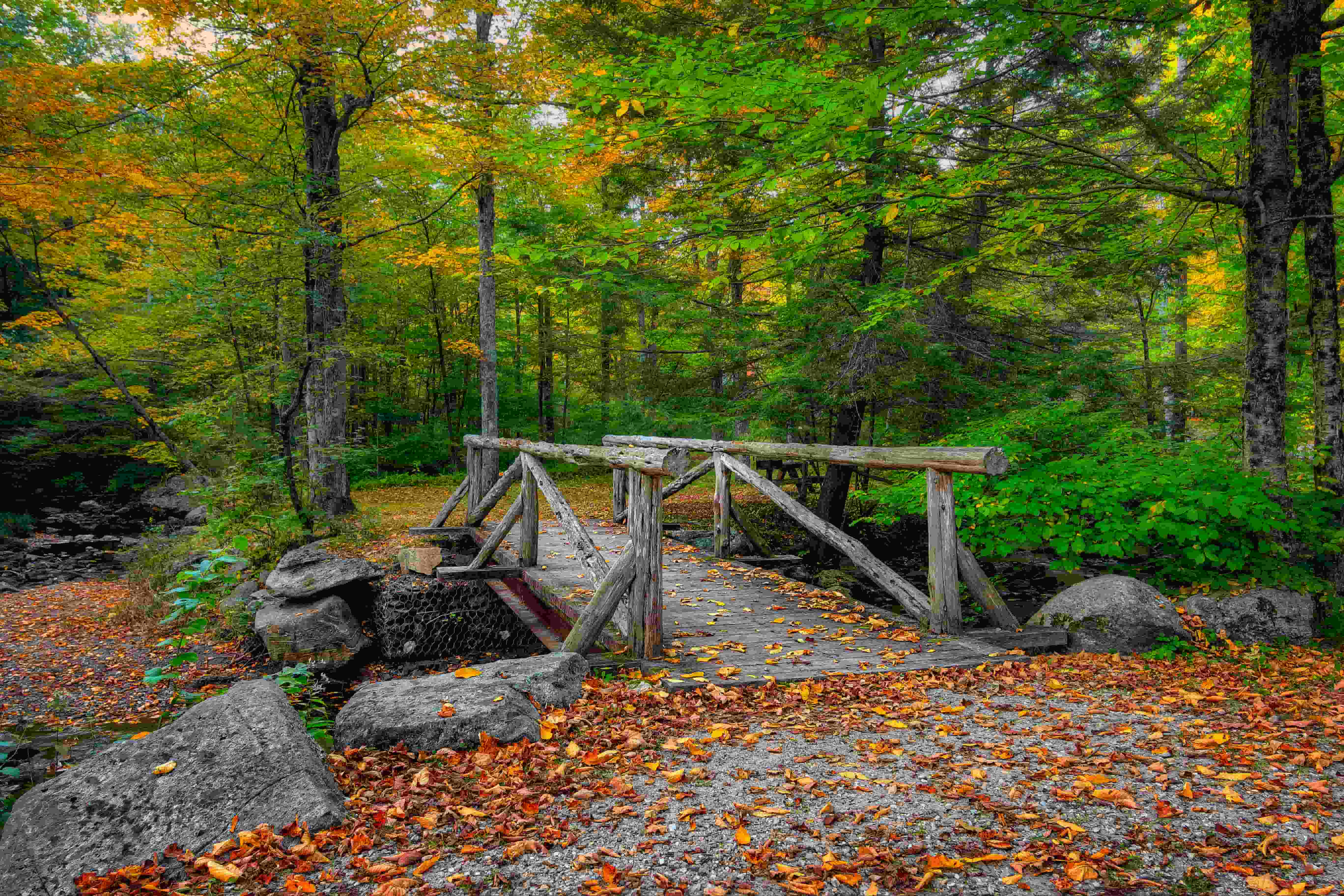 A forest trail in Macedonia Brook State Park, one of the top campgrounds in Connecticut