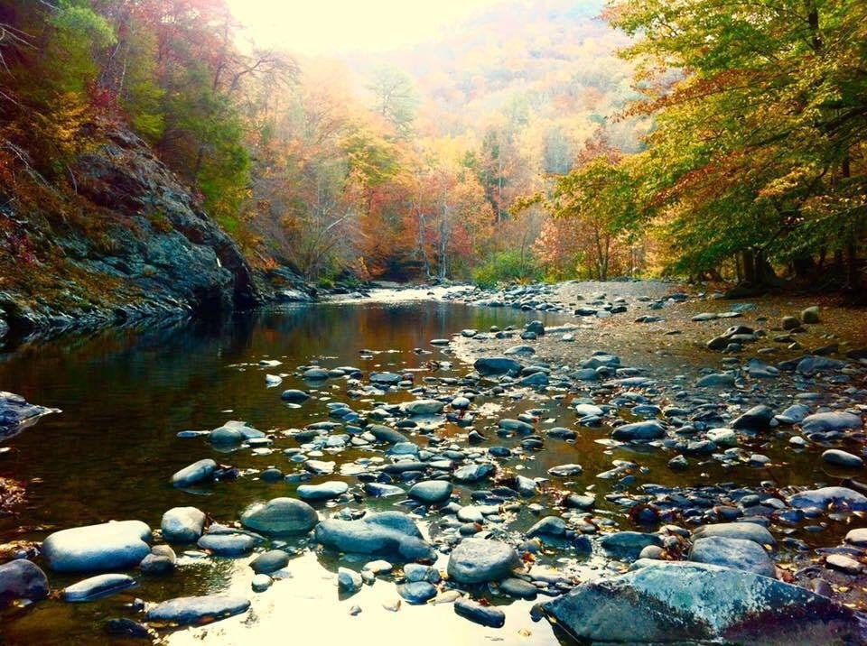 fall foliage as seen from a rocky riverbed in great smoky mountain national park