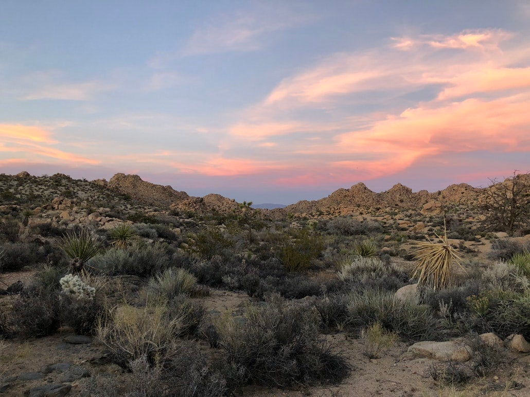 a sunset over joshua trees in a california desert