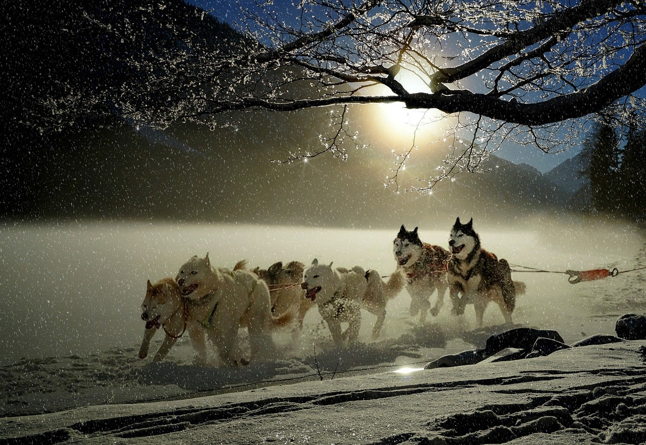 dog sledding with mountains in the background