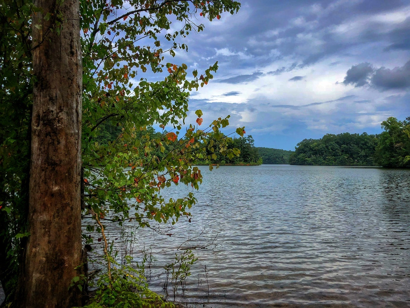a view of lake lanier from a shore line in the fall