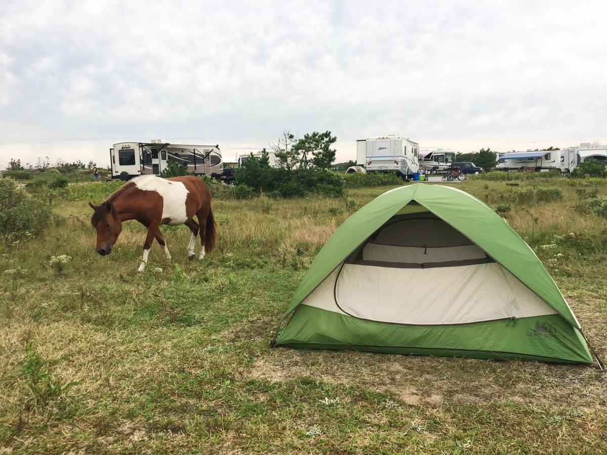 a horse grazes near a tent campsite
