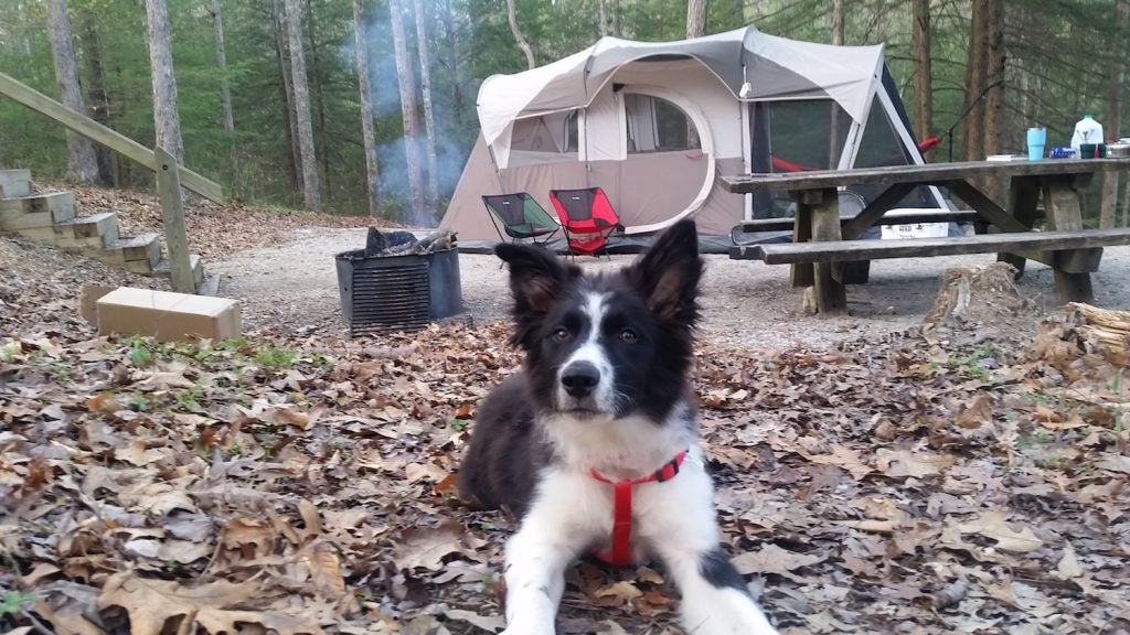 black and white dog in the foreground of a koomer ridge campsite in the fall