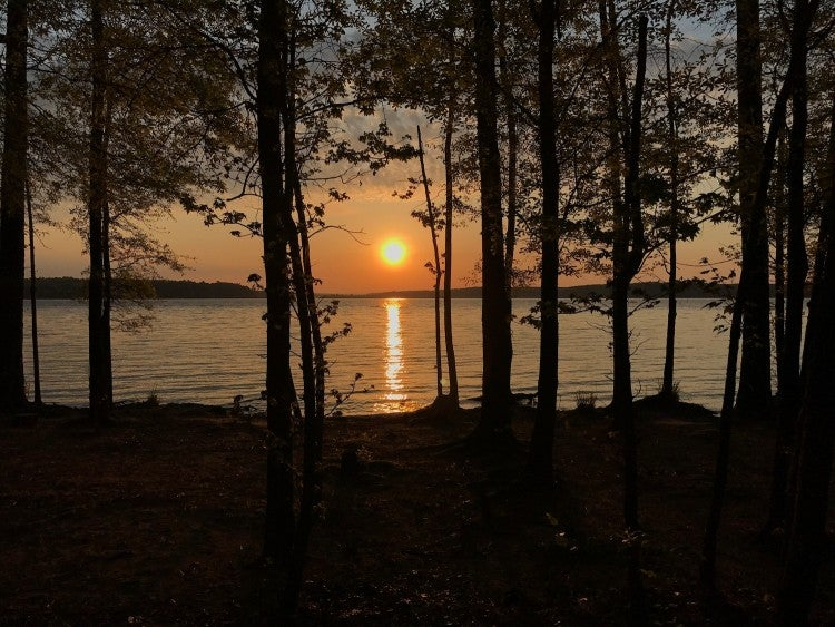 sunset over jordan lake, seen through the trees at parkers creek campground