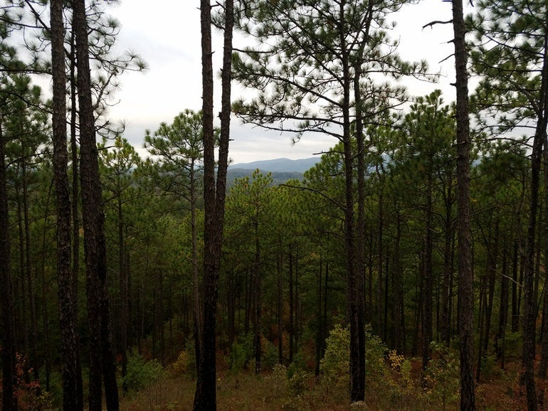 wooded view from a backcountry campground on the pinhoti trail