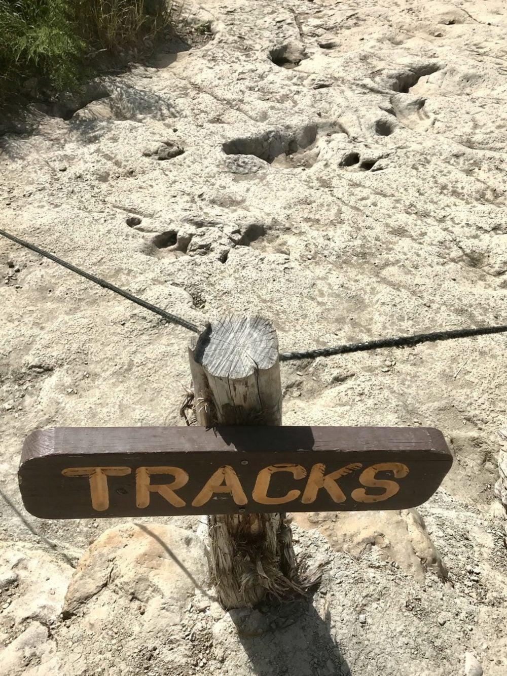 preserved dinosaur tracks in dinosaur valley state park