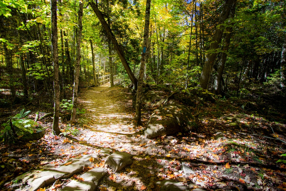 A trail winds along a forest of fall foliage