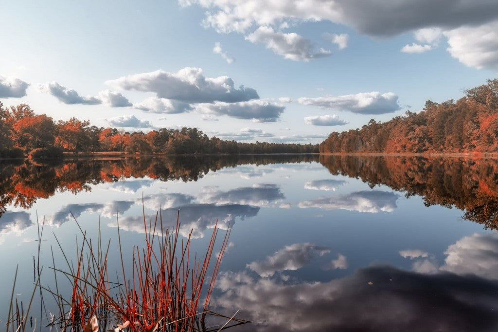 a lake in the pine barrens in new jersey