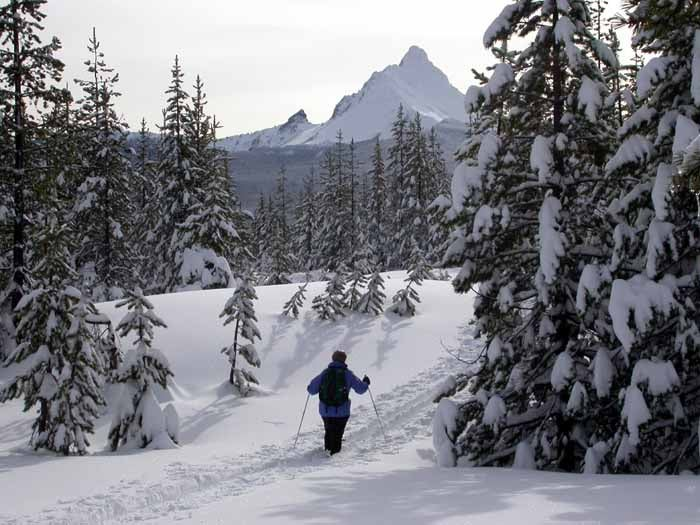 Cross coCross country skiing in the Willamette National Forest country skiing in the Willamette National Forest