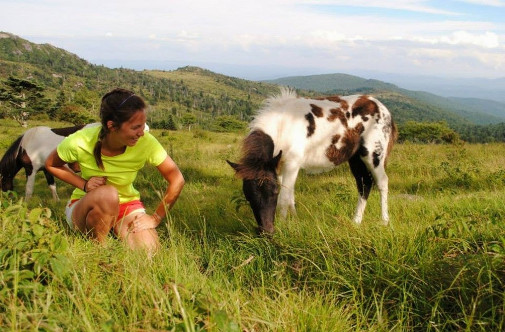 a camper in grayson highlands state park kneels next to a wild pony in a field
