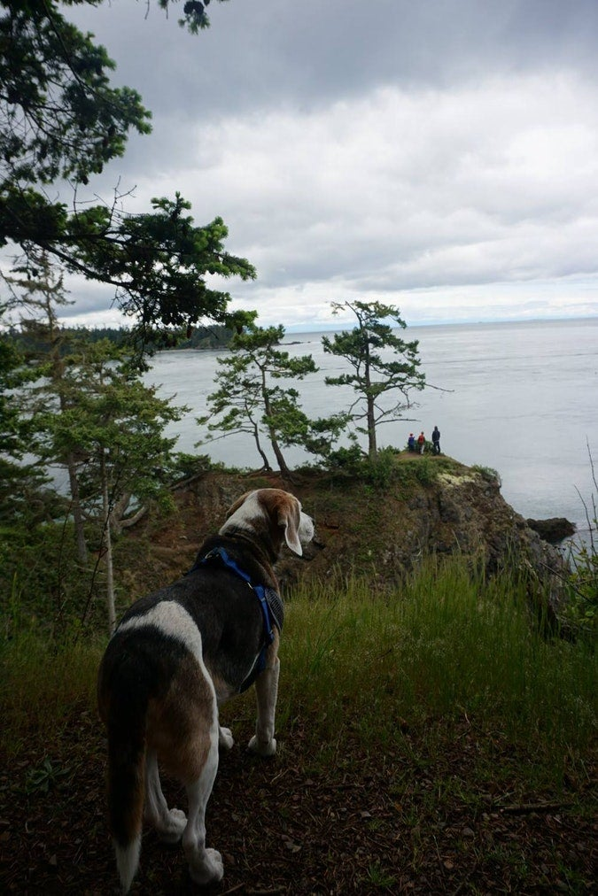 beagle looks over cliff at waters of deception pass state park