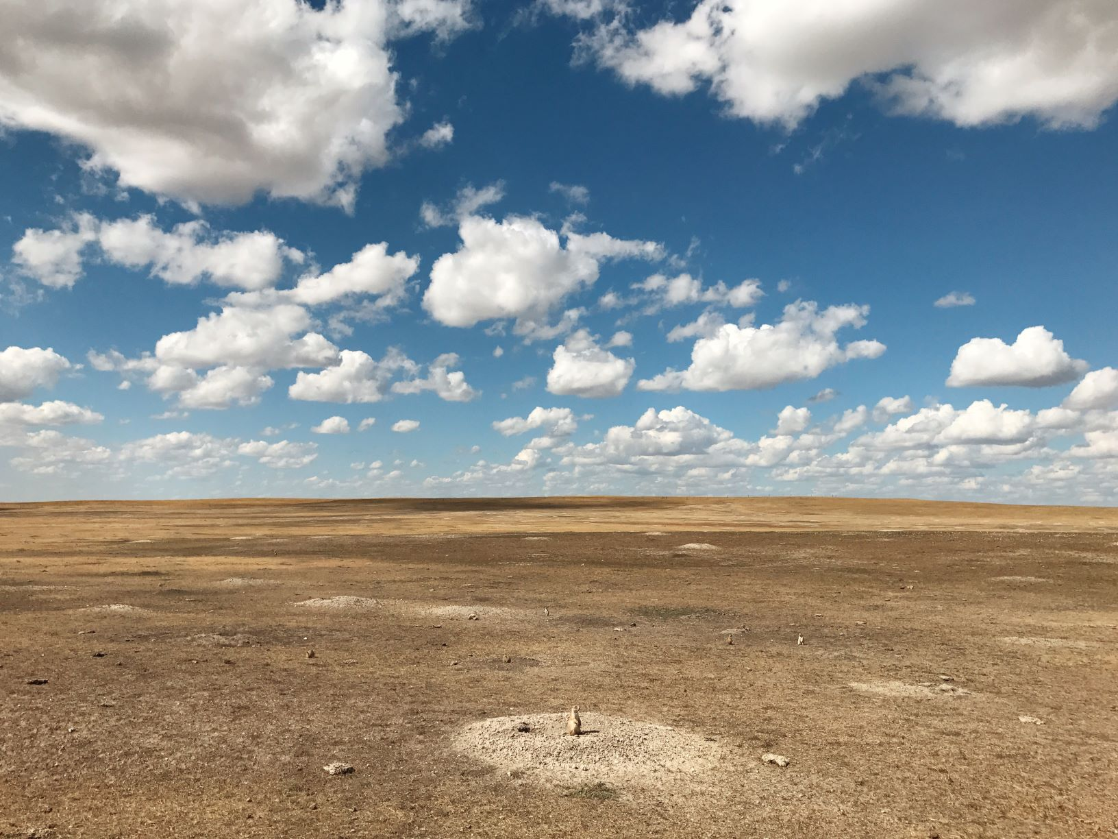 a large and flat dirt landscape showing a prairie dog habitat, with one dog standing out of their hole
