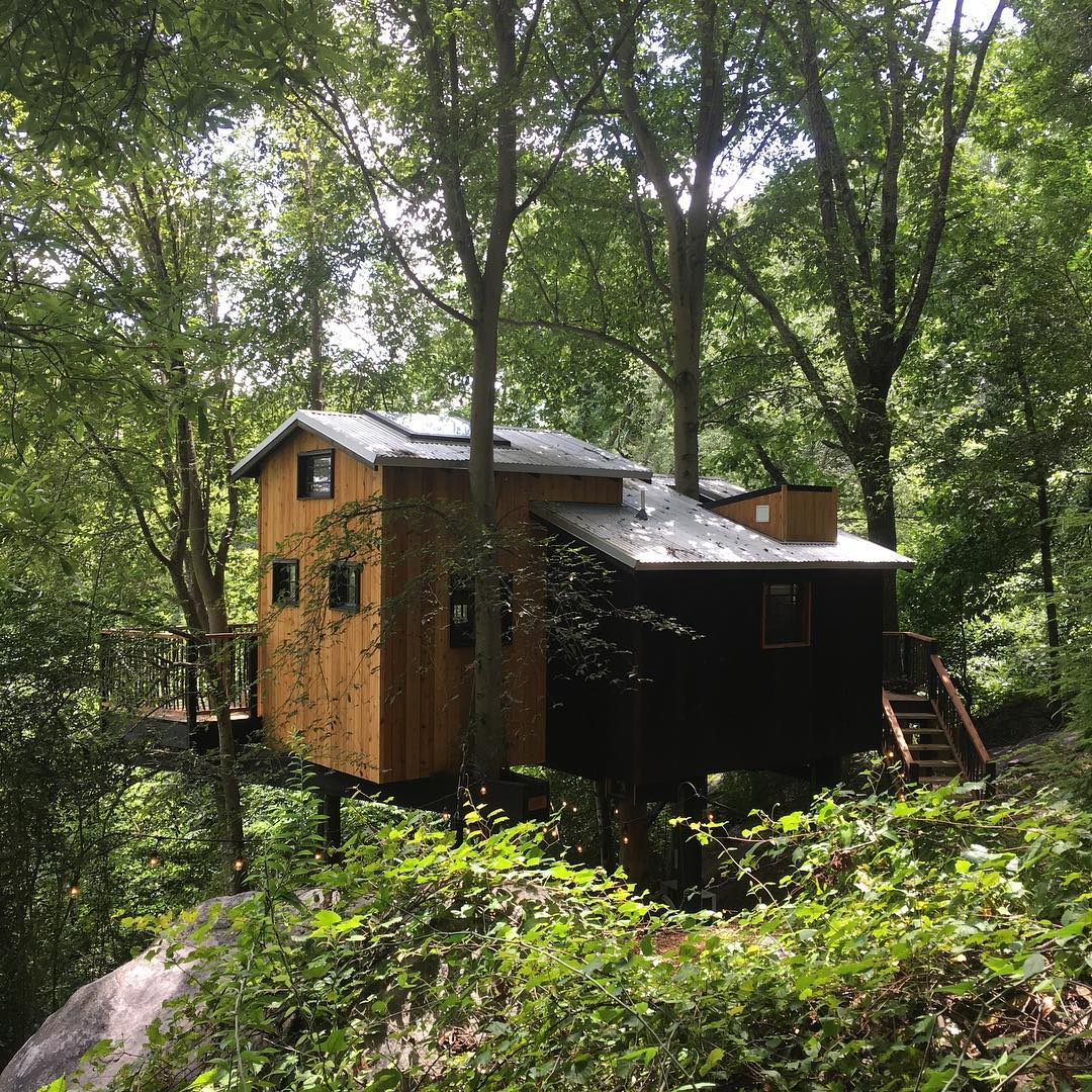 Treehouse camping cabin with a variety of green foliage surrounding cabin