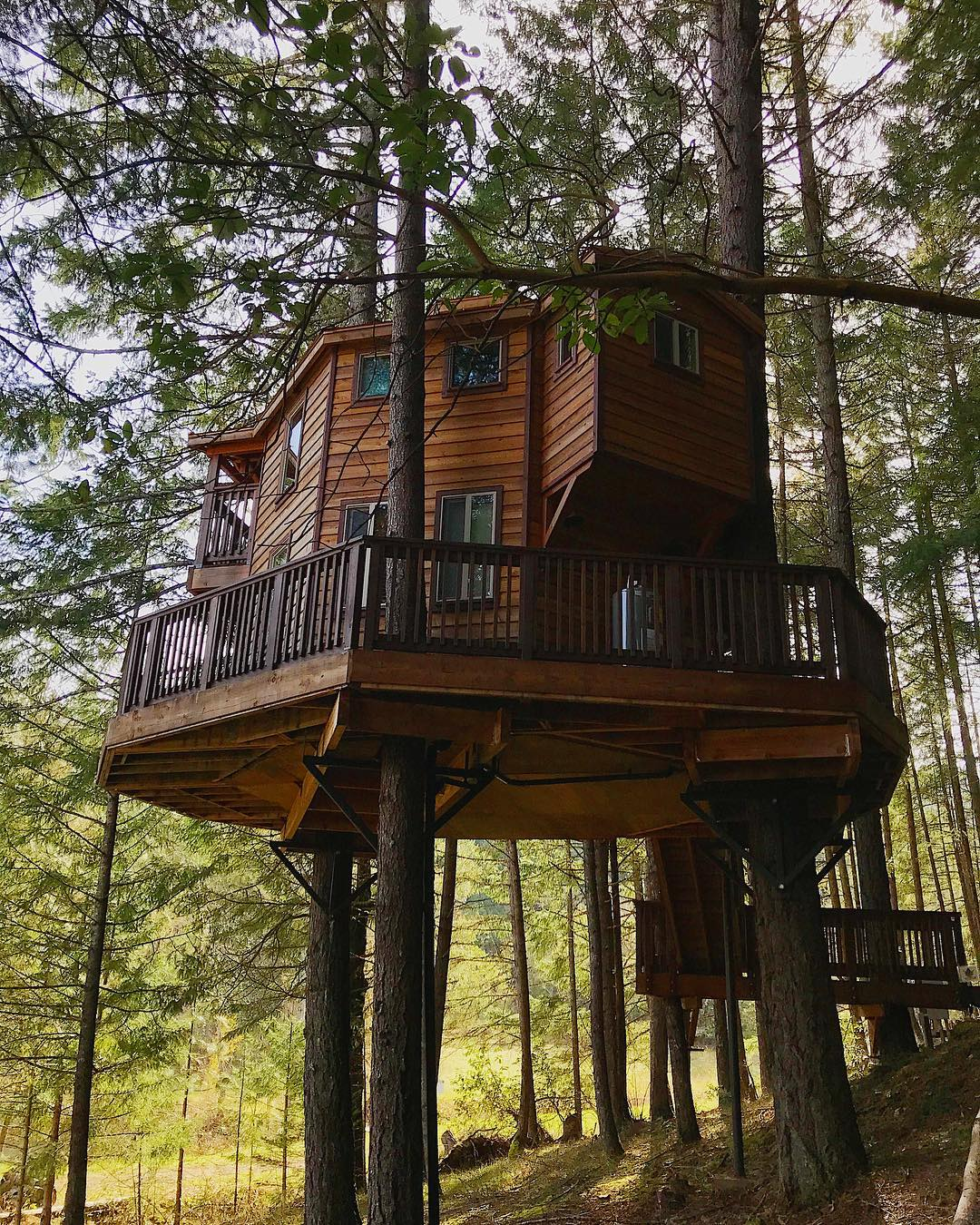 Cabin high in the trees
