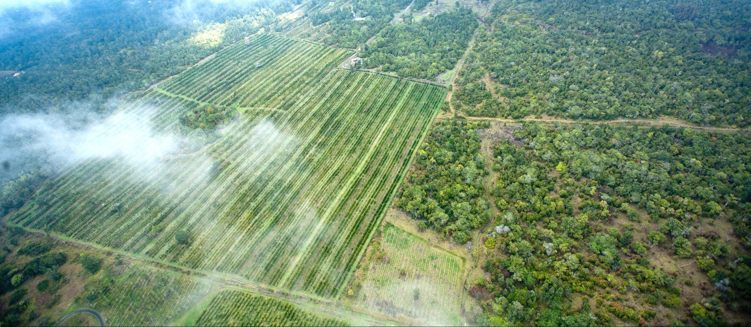aerial view of kona coffee and teas hawaiian farm