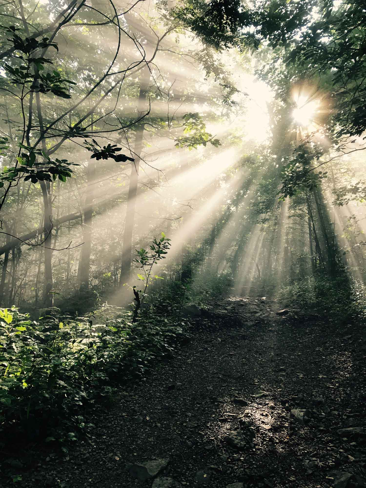 Sun rays in the woods of Shenandoah National Park, Virginia