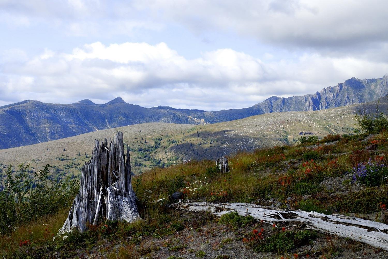 Wildflower plains on Mount St. Helens, Washington - Thru hiking the Loowit Trail