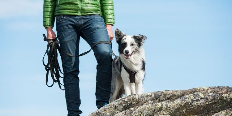 hiker in green jacket stands atop rock with leashed dog beside them