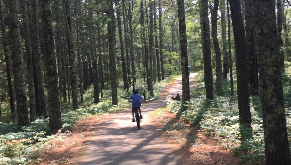 Boy biking through mossy forest along Shining Sea Bikeway