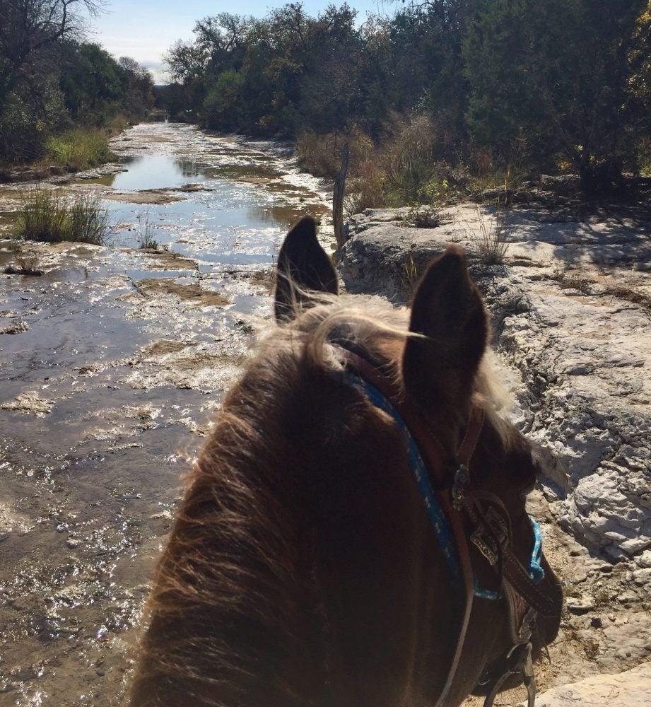 view of a river in Hill Country State Natural Area from atop a horse