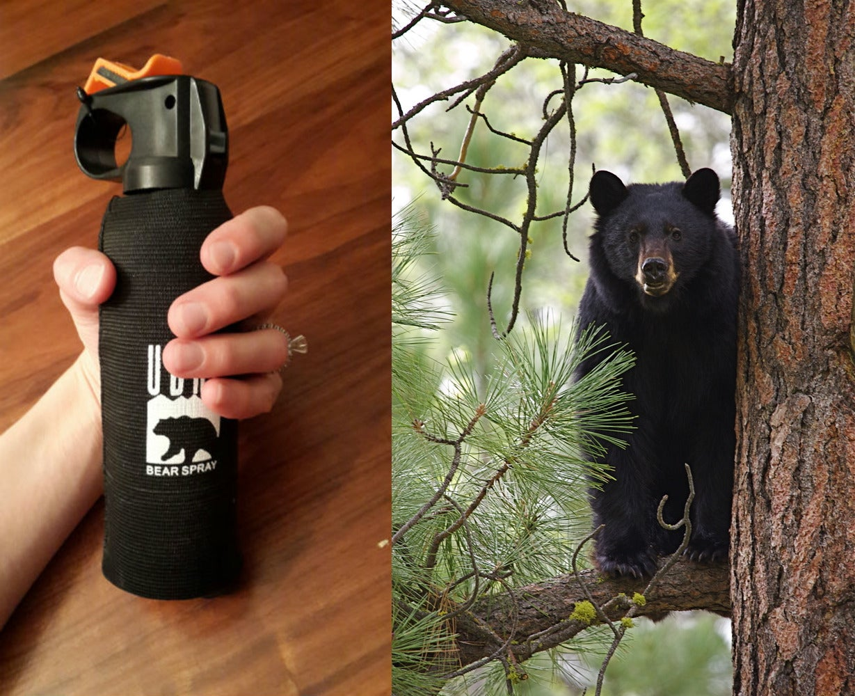 bear spray canister beside image of black bear in tree
