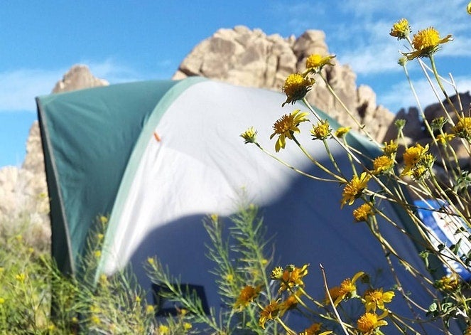 yellow wildflowers in foreground, white and teal tent in background