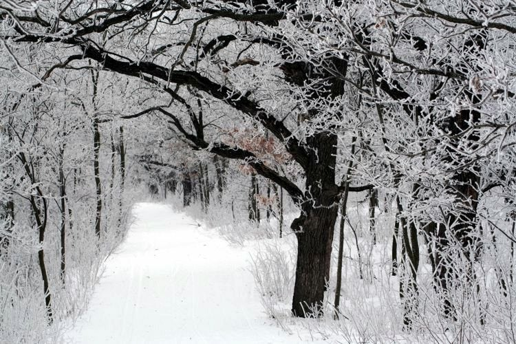 a hiking trail in a forest covered in snow