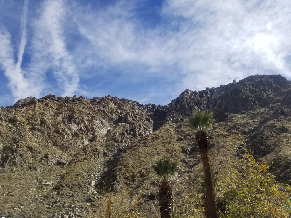 rocky Mountainside with Palm Trees in foreground