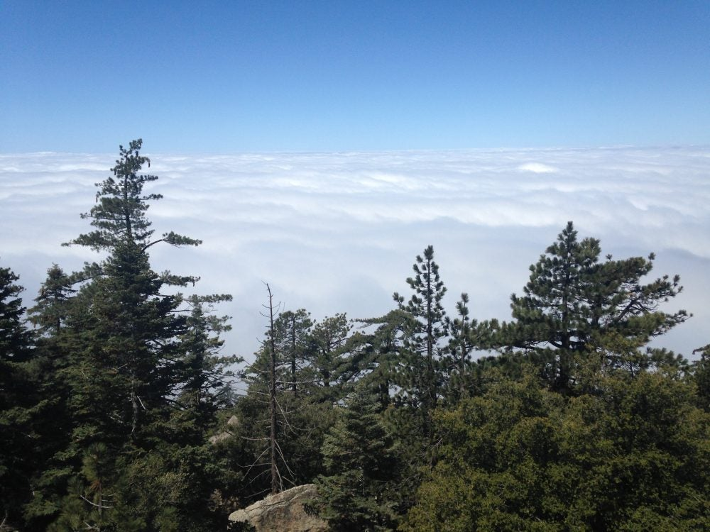 panoramic mountaintop view above the clouds with fir trees in foreground