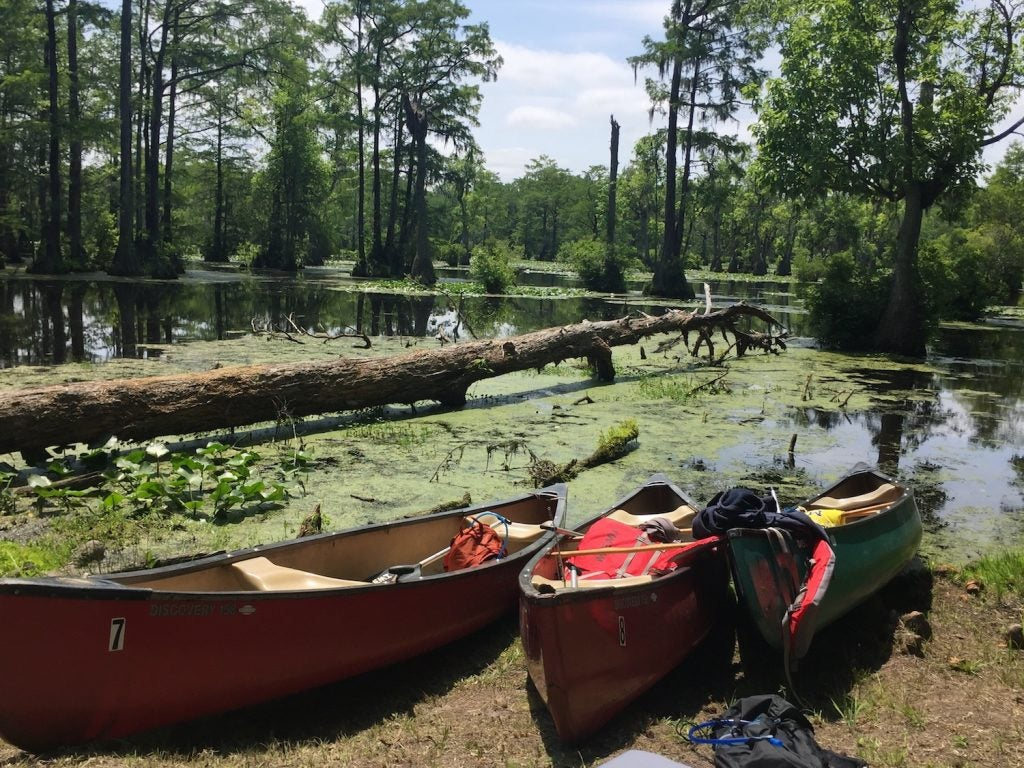 three canoes lined up on the banks of a still river with algae in north carolina