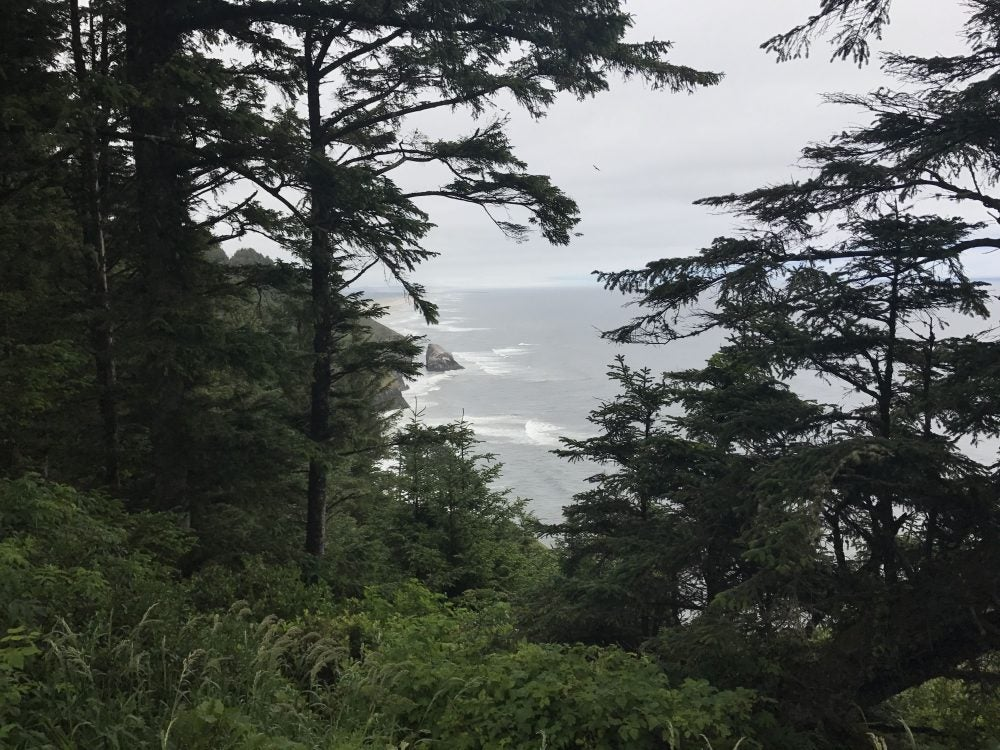 looking through the forest down towards the rocky oregon coast