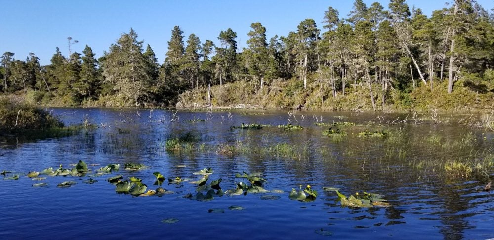wetland with lily pads surrounded by trees at bluebill campground