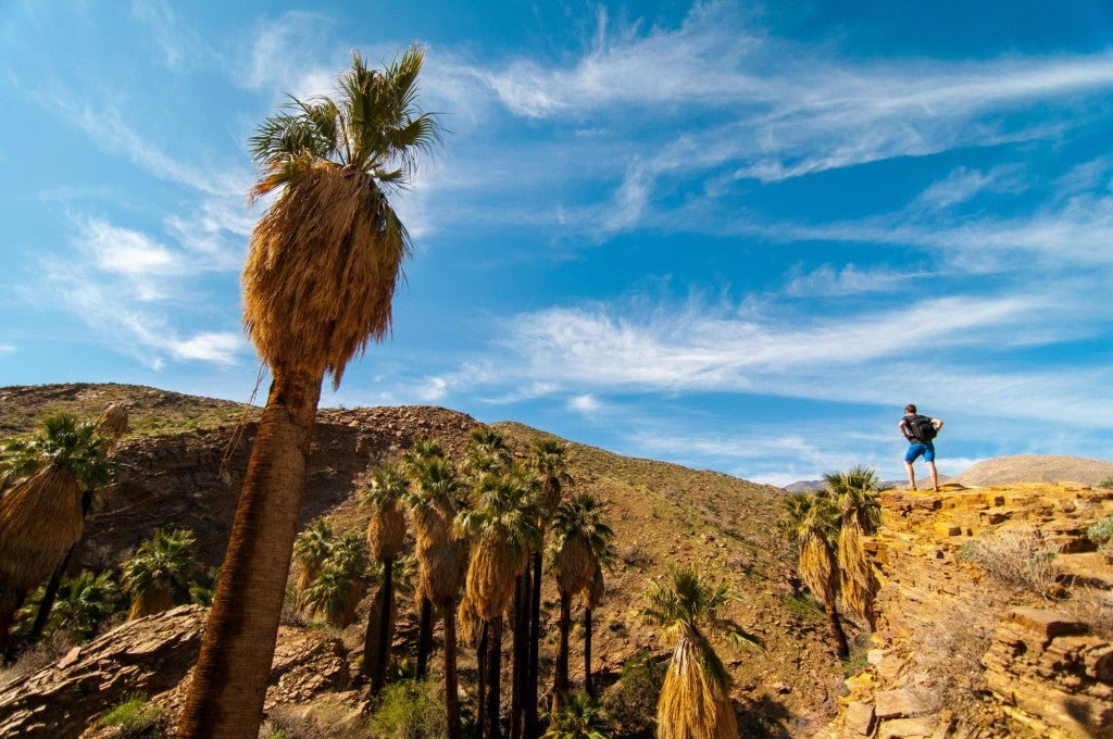 hiker stands proudly in the distance amongst palm trees in palm springs desert