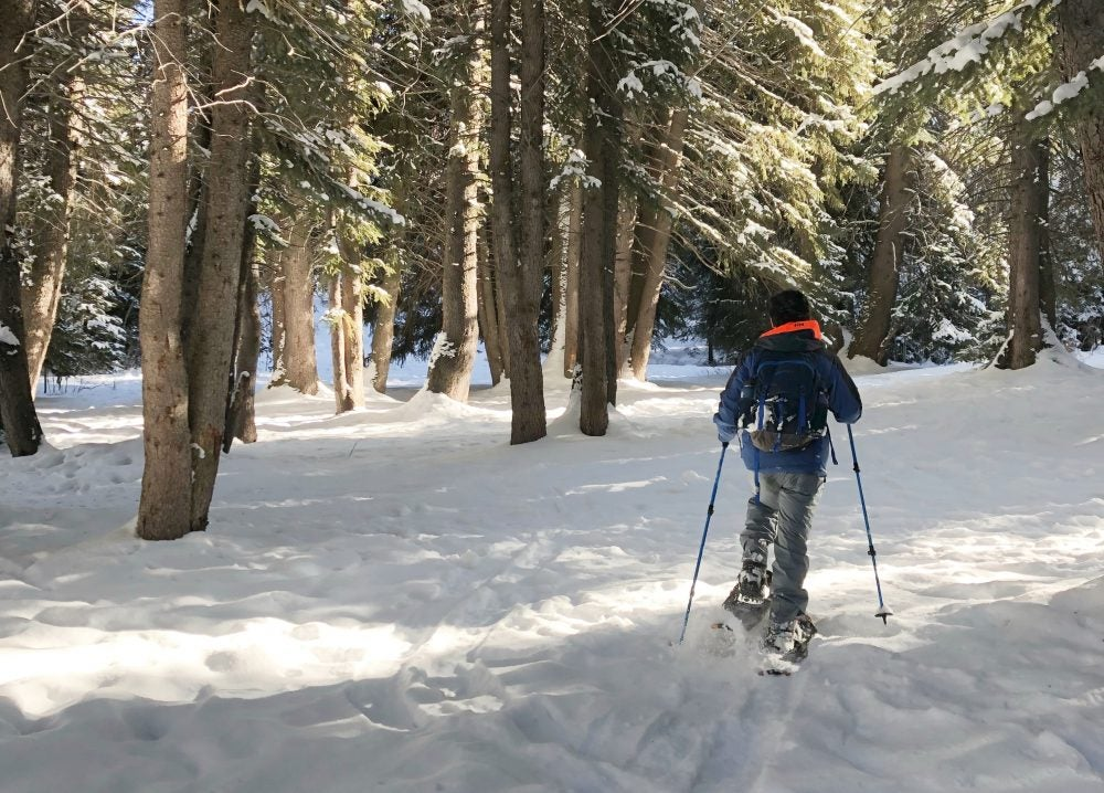 cross country skiier treks toward trees in the snow