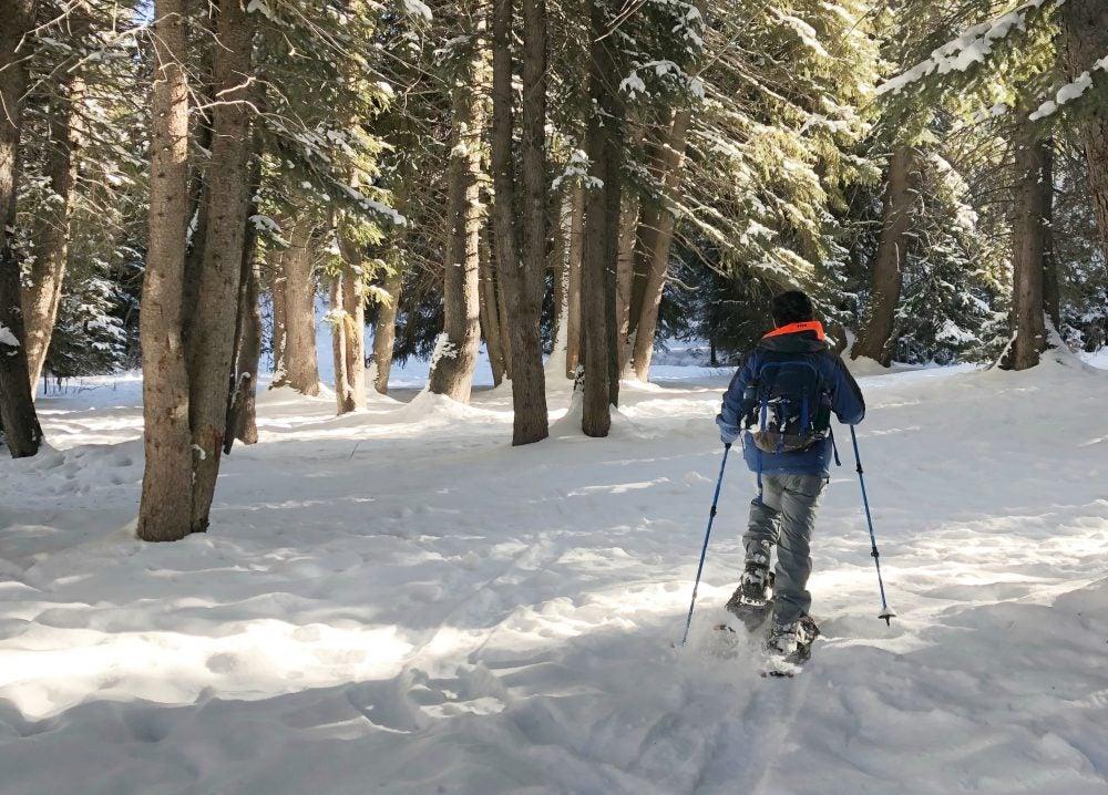 cross country skiier treks toward trees in the snow