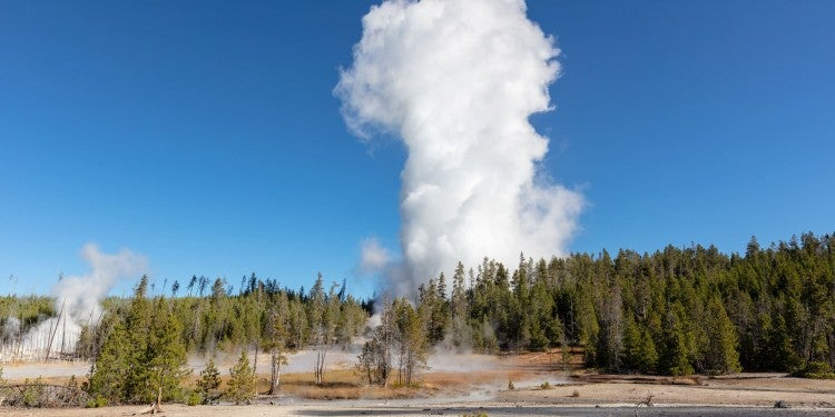 a geyser erupts over a bare forest near hot springs