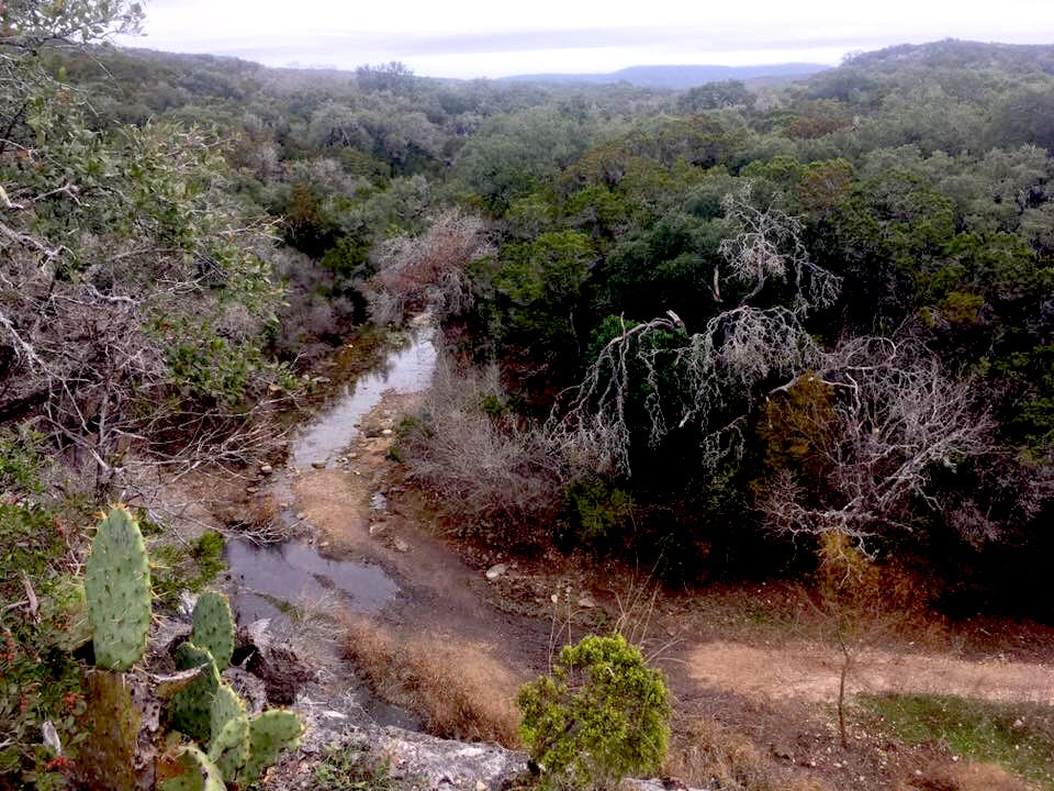 Arroyo filled with cacti and other desert shrubbery near San Antonio