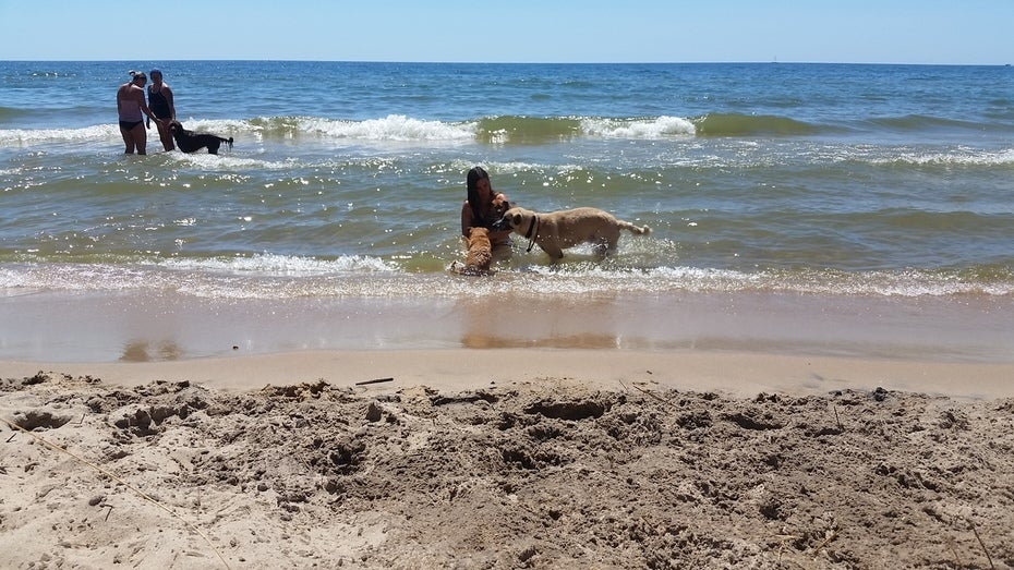 Girl playing in the ocean with a dog.