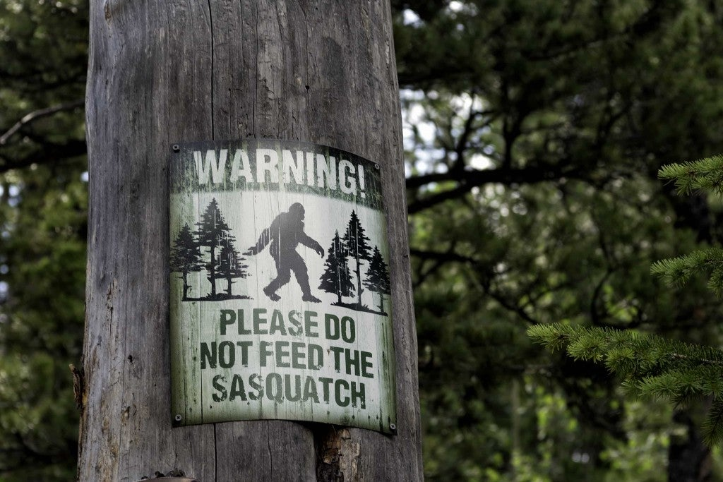 a bigfoot sign on a tree in the woods