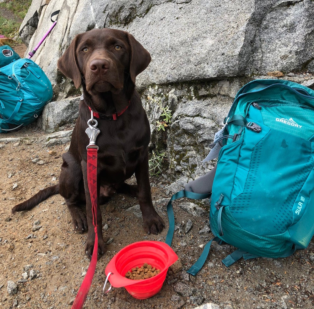 Dog sitting next to blue hydration pack